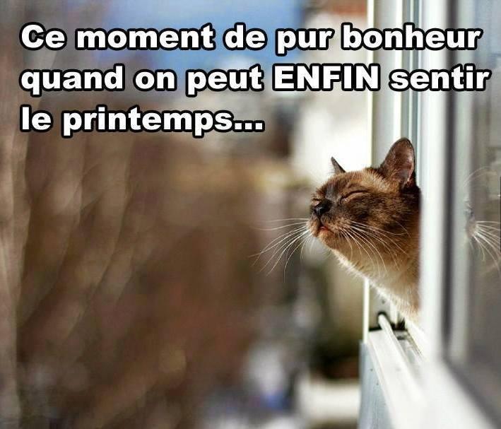 """Résultat de recherche d'images pour """"c'est le printemps chat"""""""