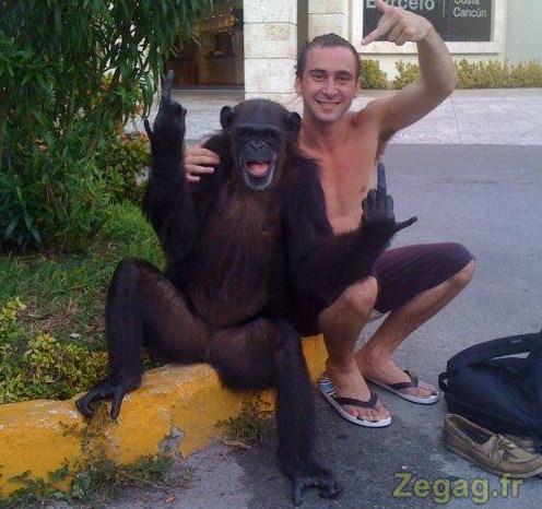 On peut tout apprendre à un singe même à faire des doigts d'honneur