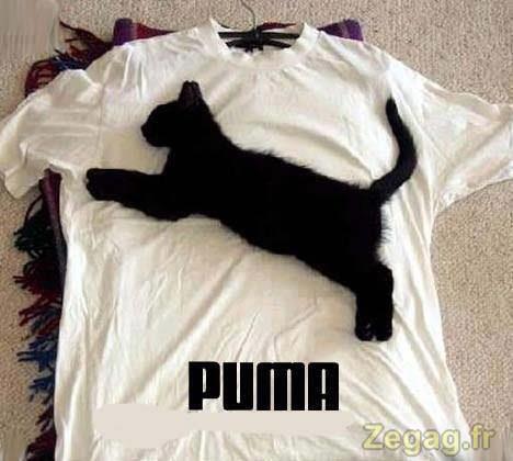 puma habits