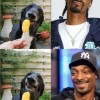 Snoop Dog porte bien son nom