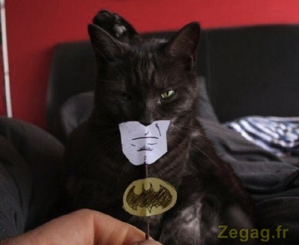 Batcat le chat déguisé en batman